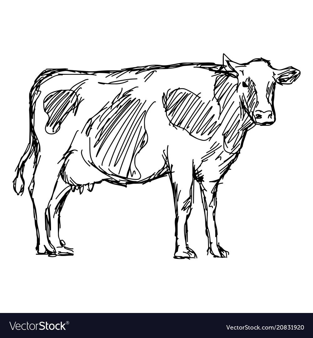 Cow sketch doodle hand drawn