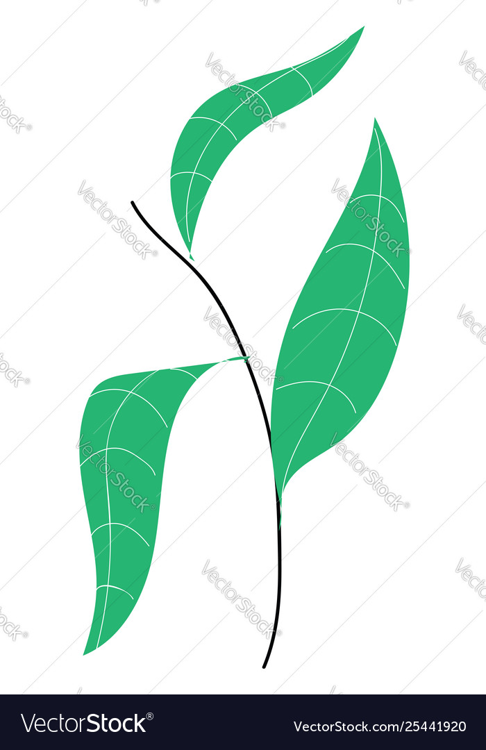 Plant with leaves hand drawn design on white