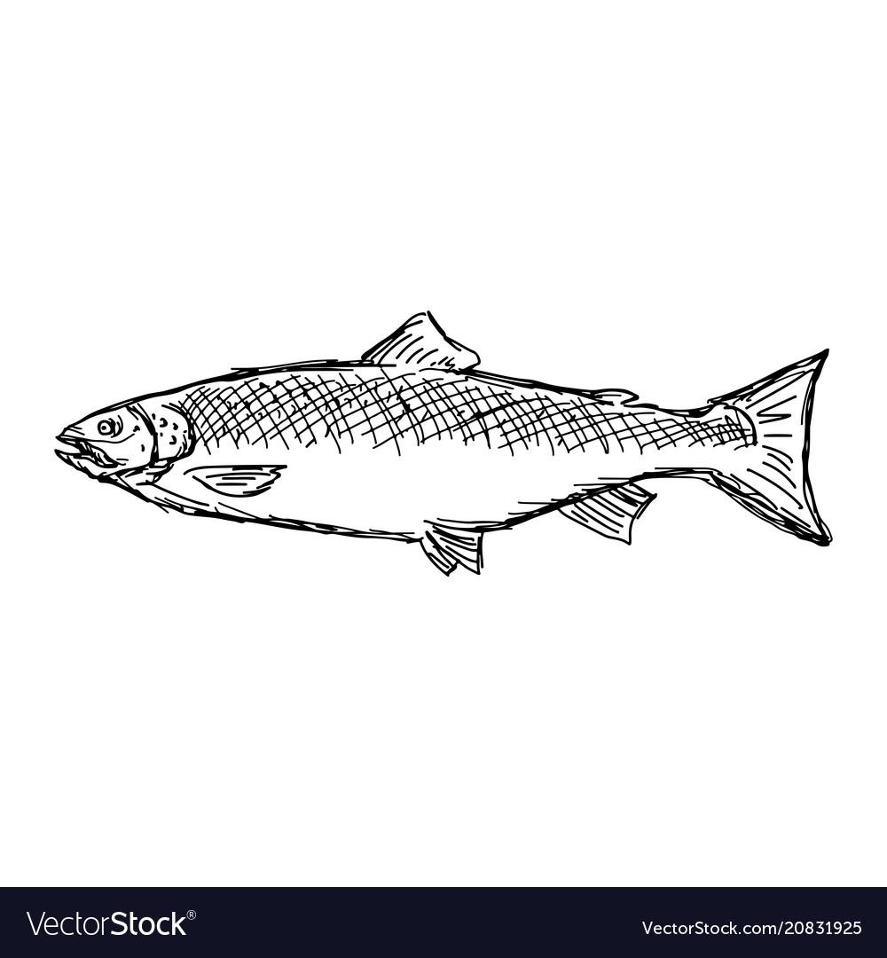Salmon fish sketch doodle