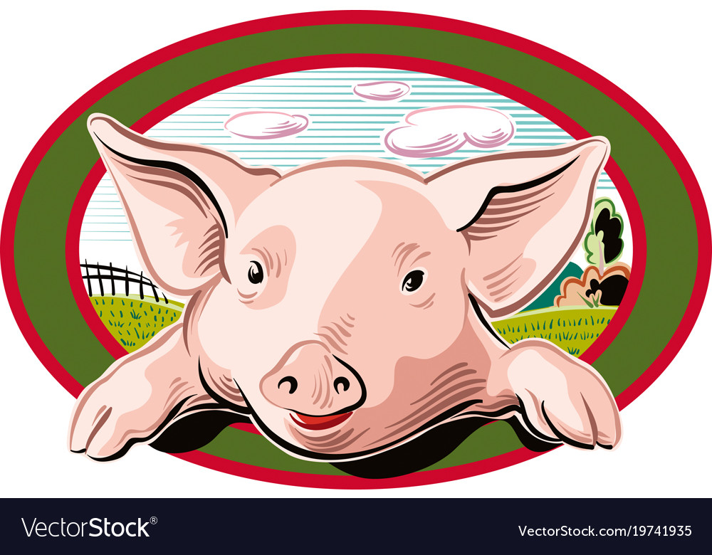 Pig looks out from an oval frame Royalty Free Vector Image