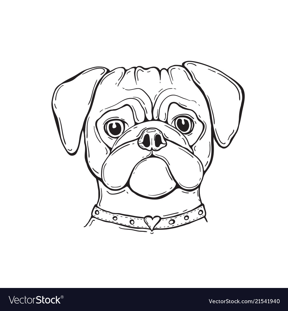 d3f4803a5b6d Head dog pug hand-painted portrait black and Vector Image