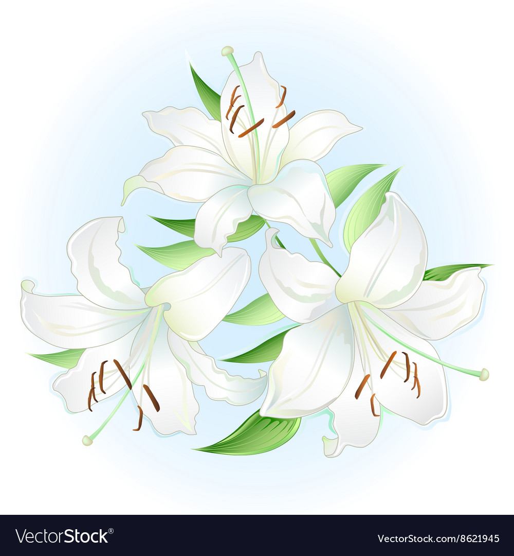 White Lilies Bouquet Royalty Free Vector Image