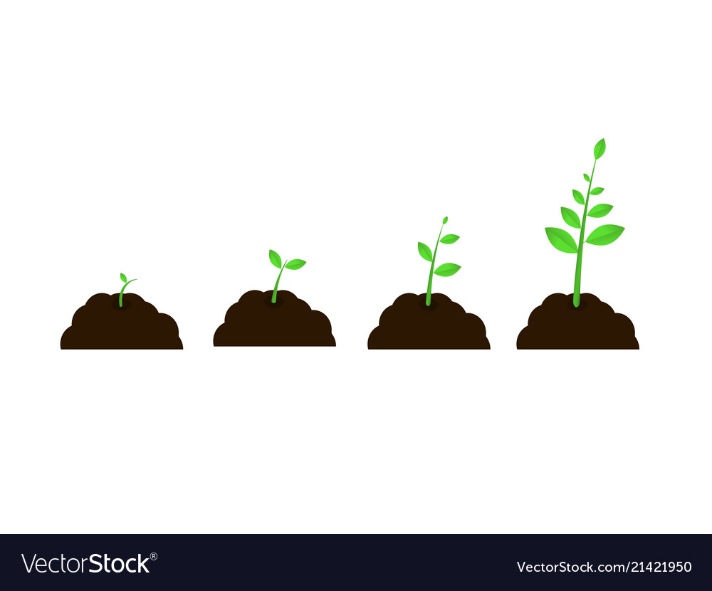 Plant Grow Stages Seed Growth Speed Royalty Free Vector