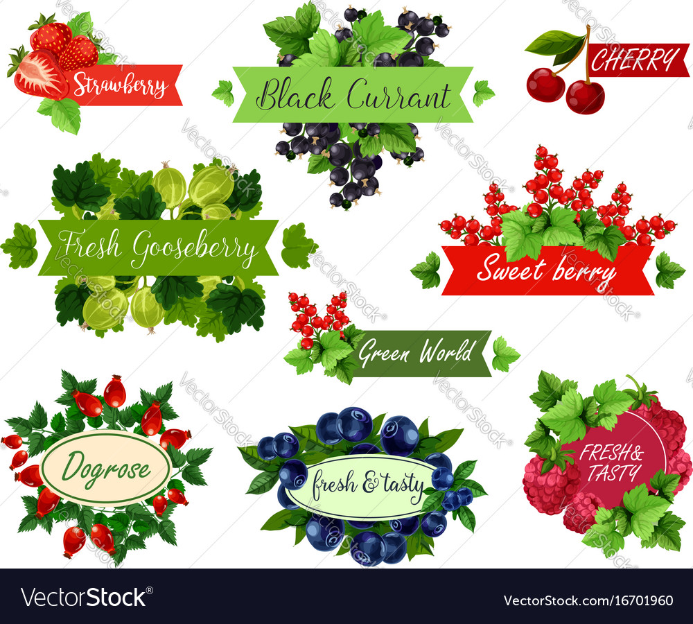 Berry and fruit label set for food drink design