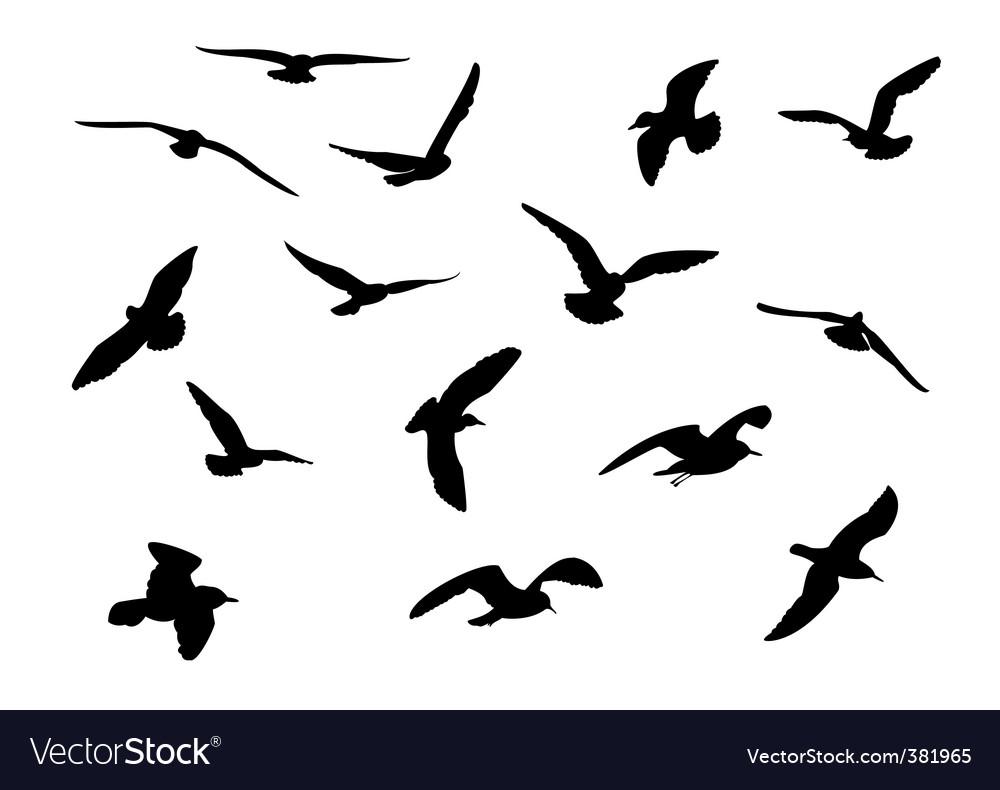 Gulls vector image