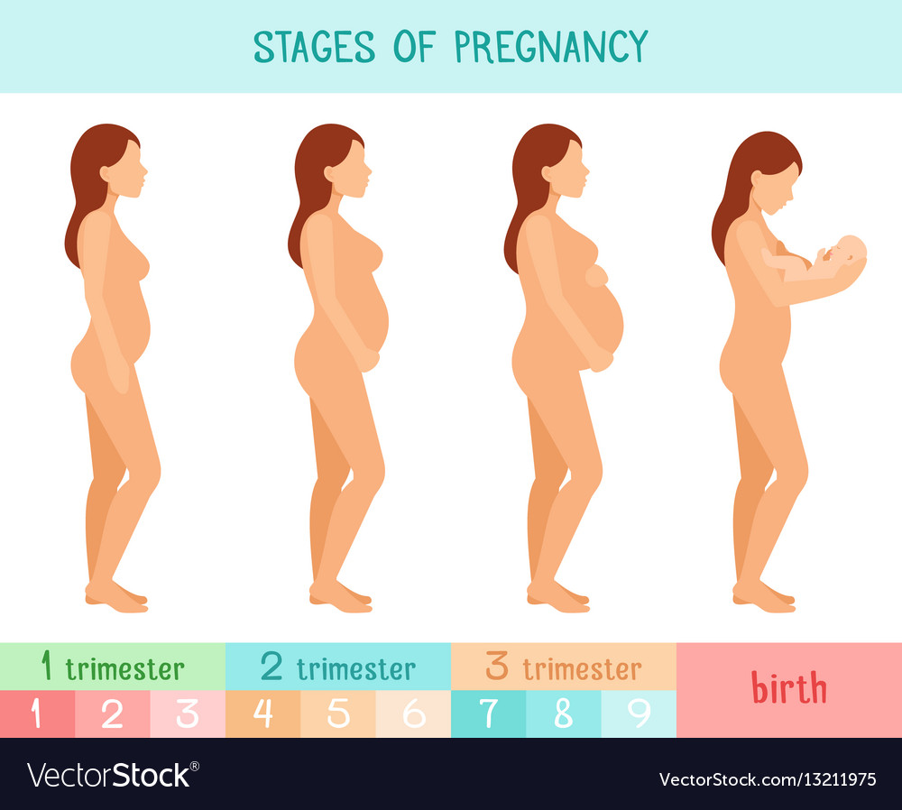 Pregnant beautiful woman infographics