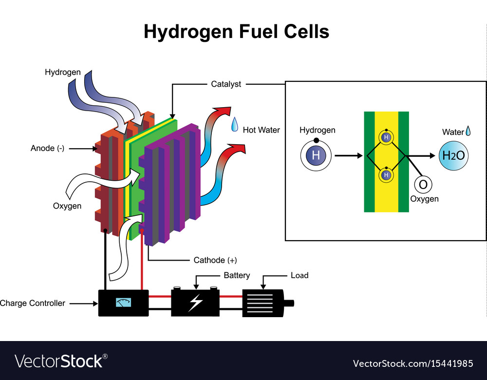 Hydrogen Fuel Cells Diagram Royalty Free Vector Image