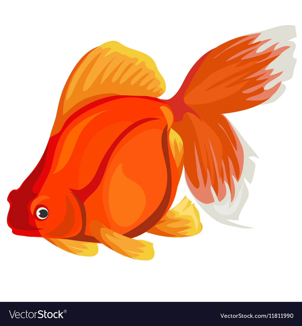 Nemo & Fish Vector Images (59)