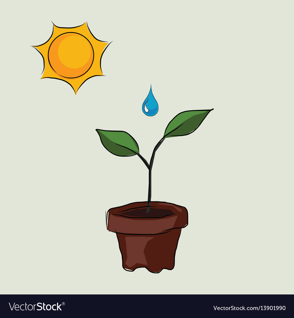 Planting process in pots with sun and water drop