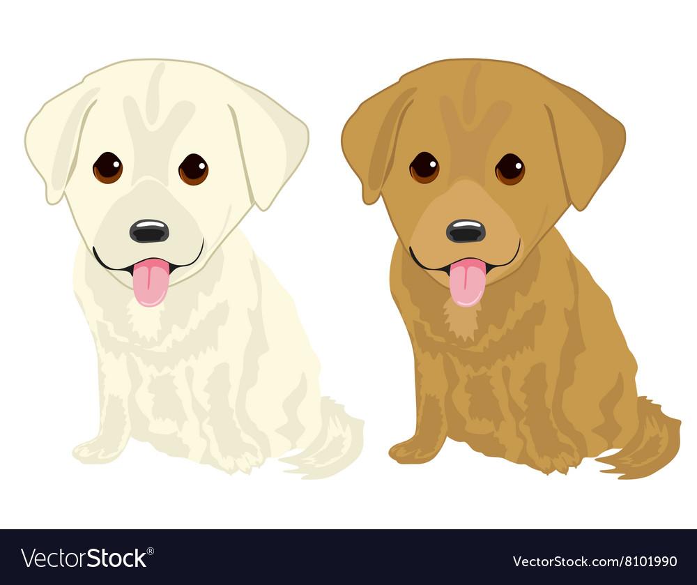 Portrait Of Two Cute Labrador Puppies Royalty Free Vector