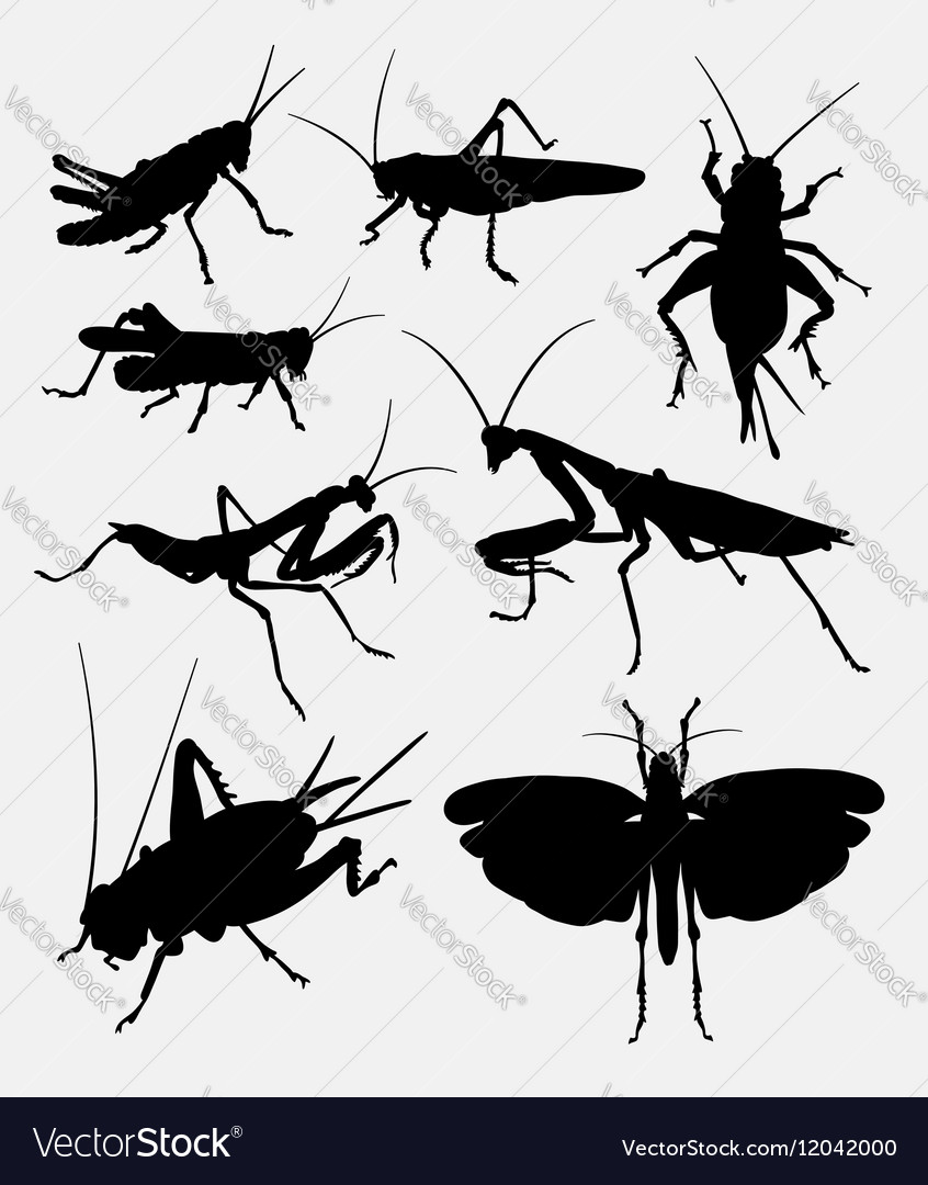 Grasshopper and cricket insect animal silhouette