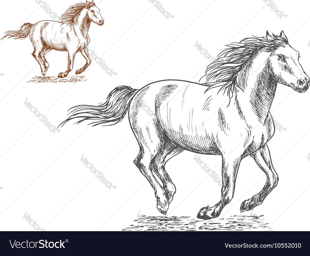 running horses pencil sketch portrait royalty free vector