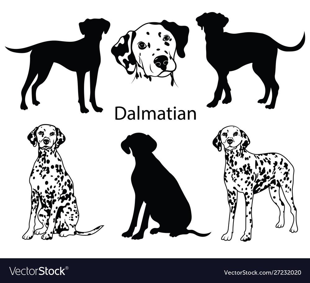 Dalmatian set collection pedigree dogs black