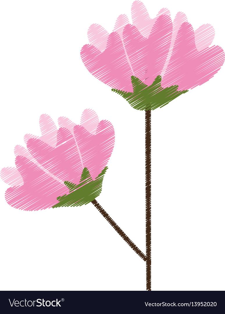 Flower spring flourishes sketch vector image