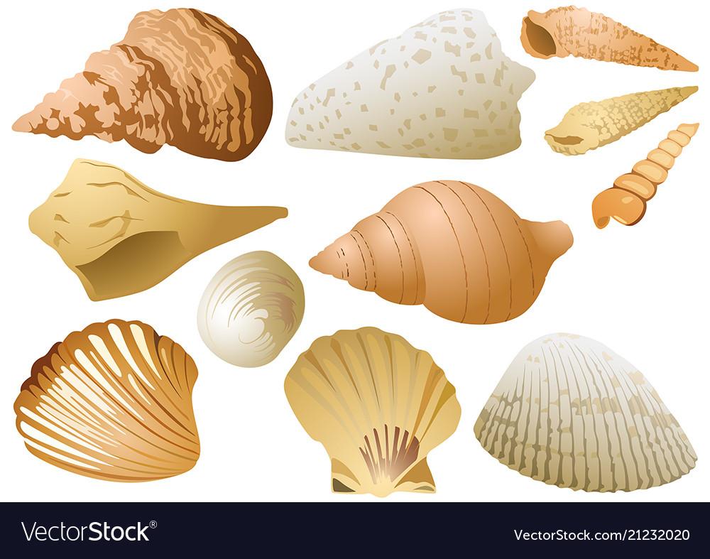 Seashell set on white background