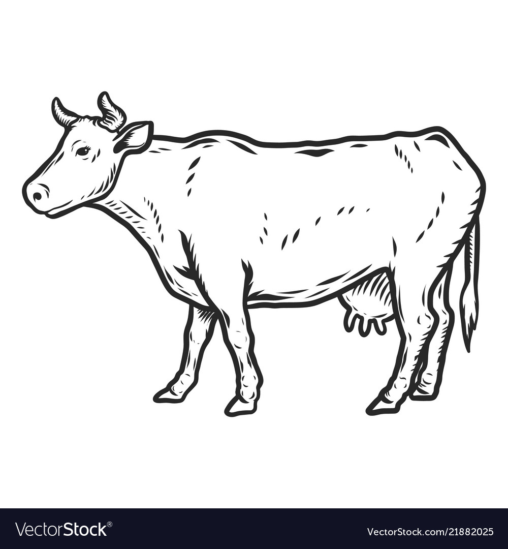 Cow icon hand drawn style