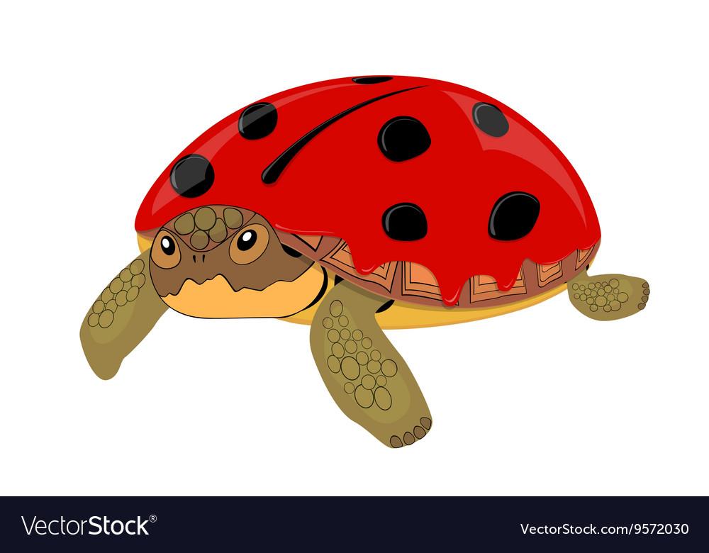 Turtle aka ladybug