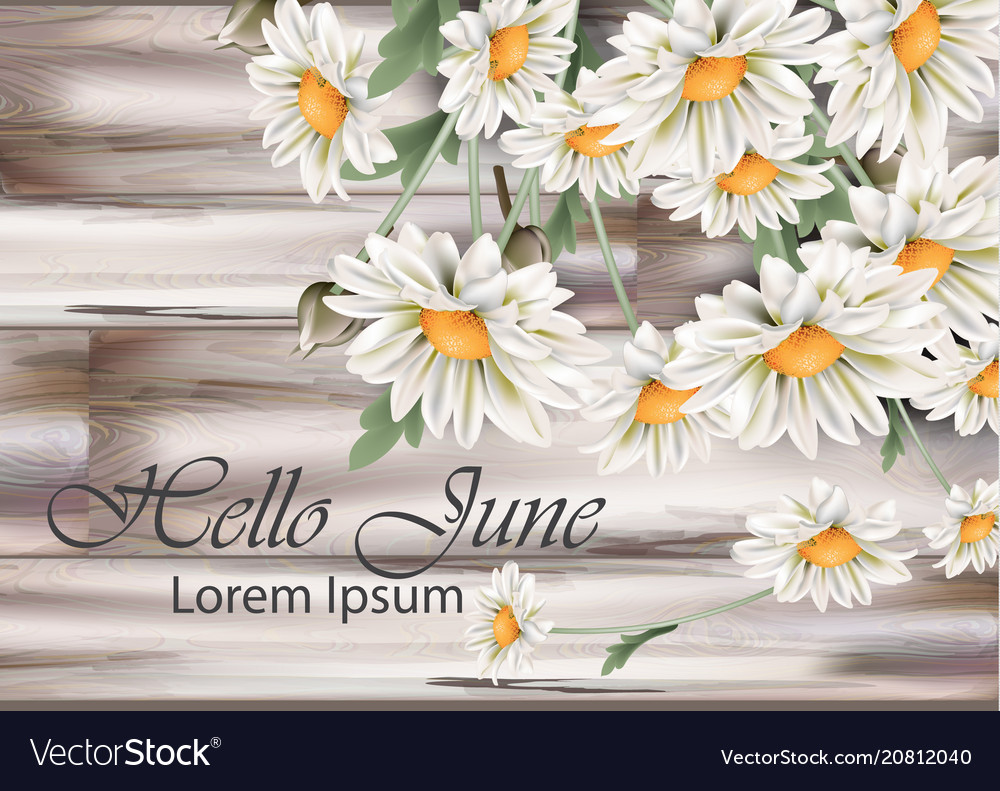 Vintage chamomile bouquet spring floral