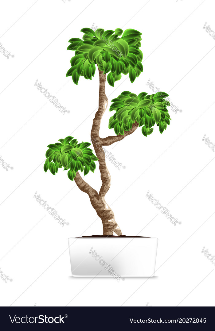 Bonsai tree isolated on white element of home