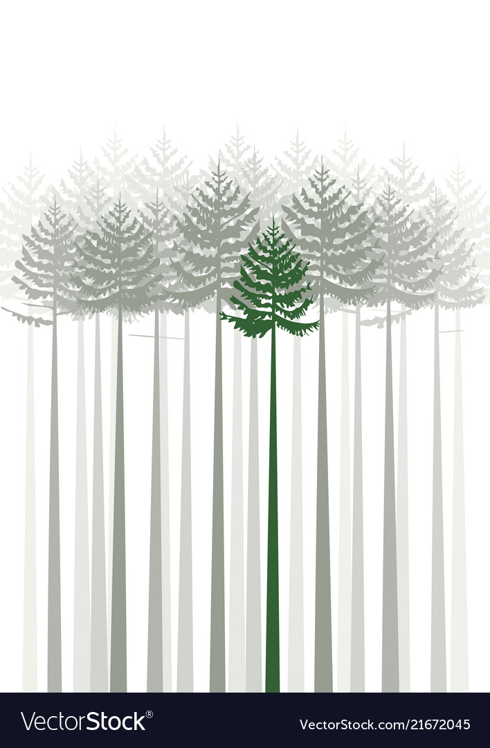 Forest fir trees