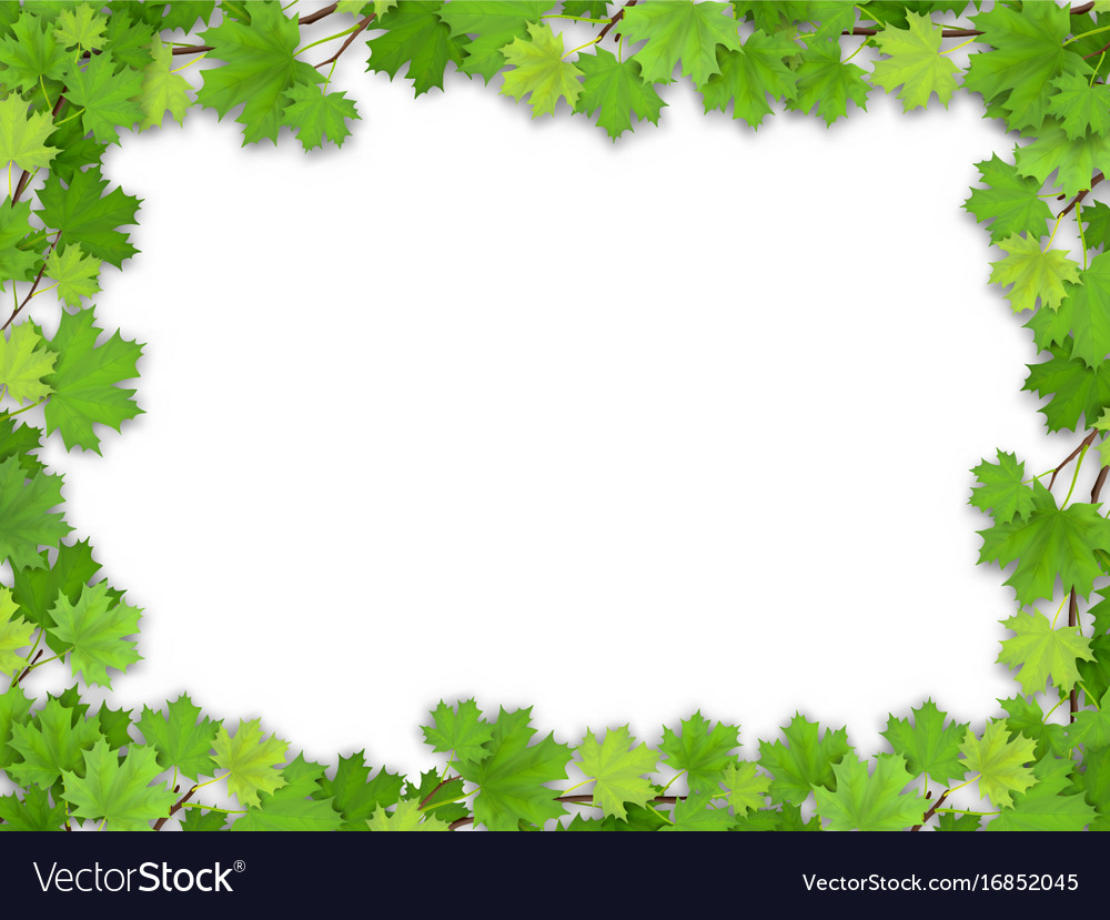 Frame from the green maple leaves Royalty Free Vector Image