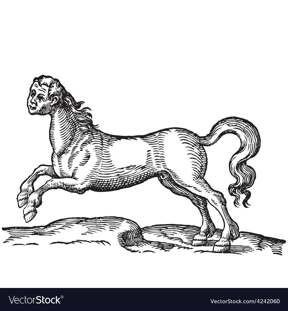 Human headed horse engraving