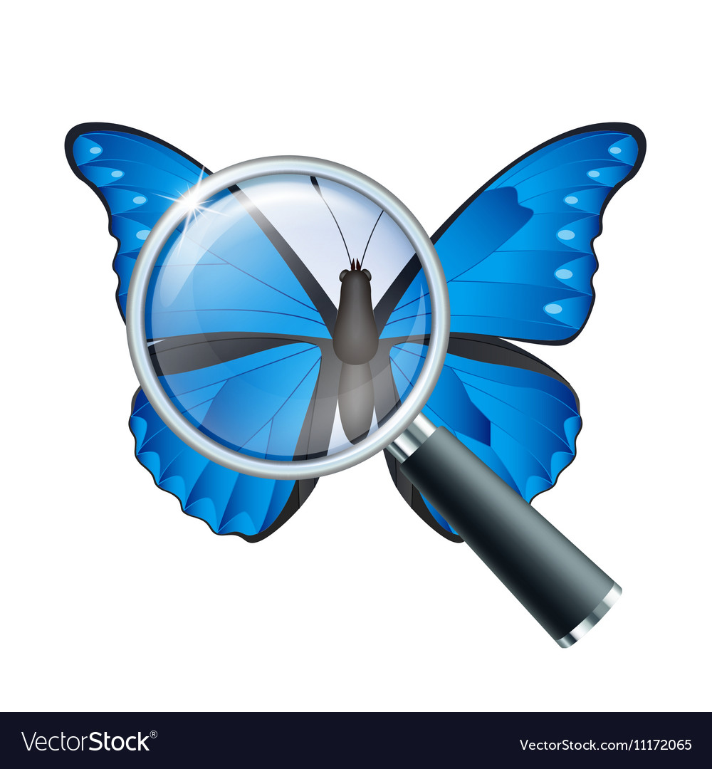 Magnifying glass and Butterfly vector image