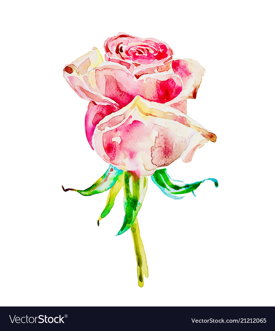 Original watercolor painting of rose isolated on a