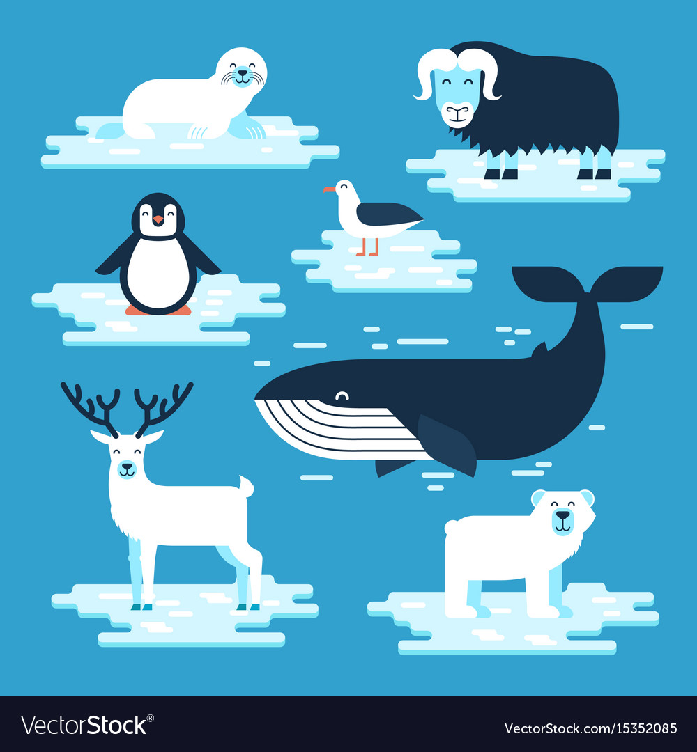 Arctic and antarctic animals set flat vector image