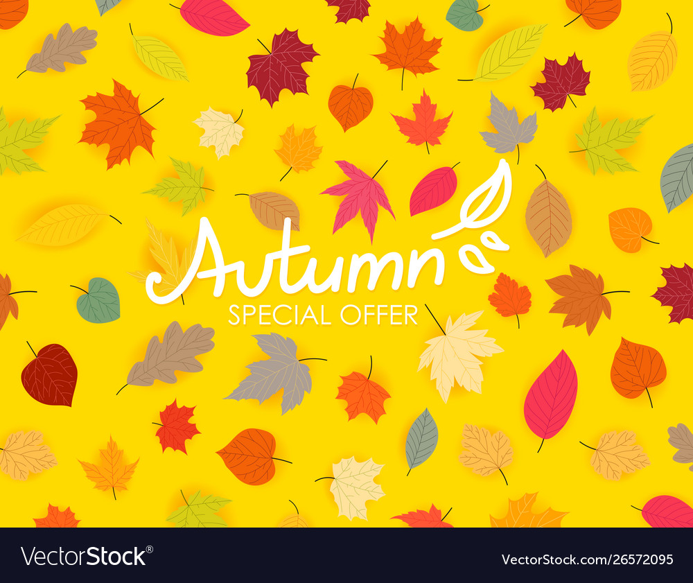 Autumn special offer color fall leaves