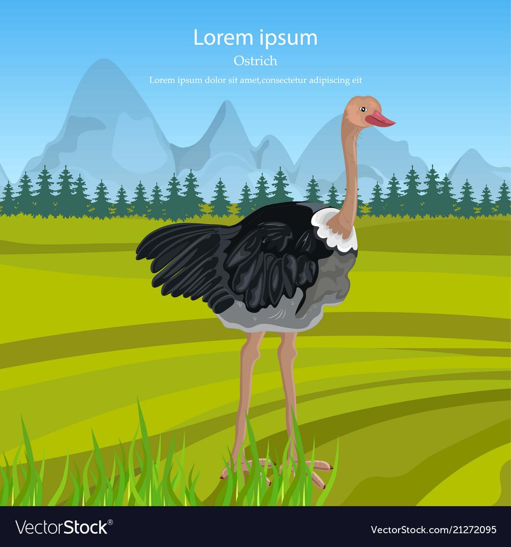 Ostrich bird in the wild nature green