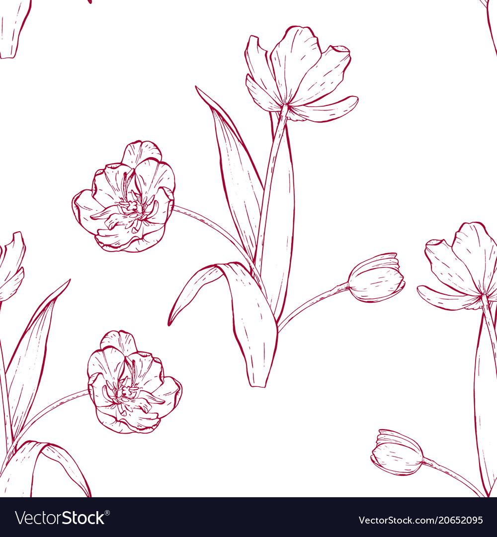 Tulip bouquet hand drawn