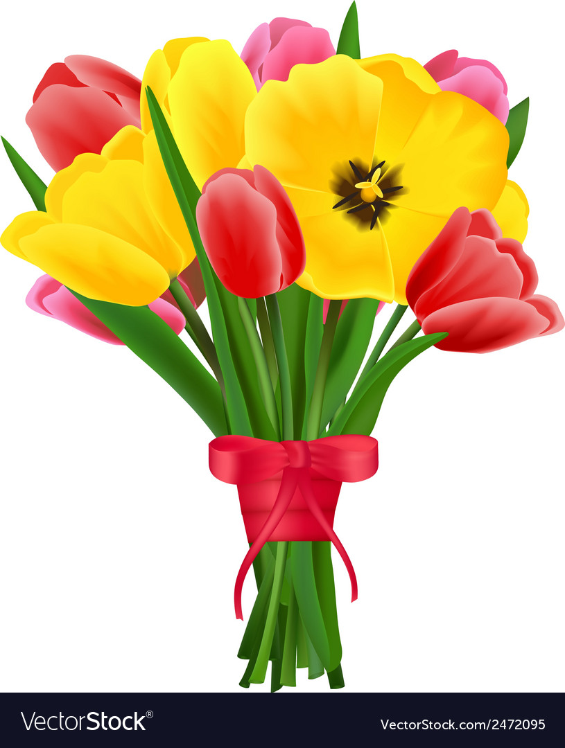 Tulip Flower Bouquet Royalty Free Vector Image