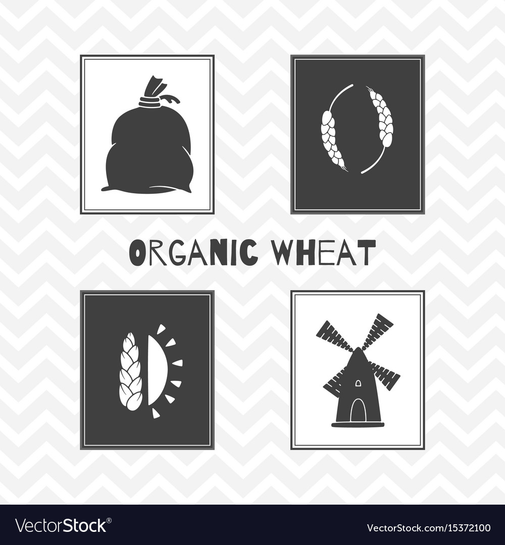 Hand drawn silhouettes wheat or flour posters vector image
