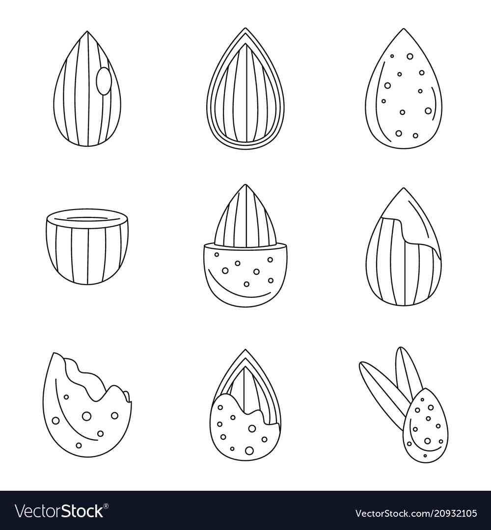 Almond walnut oil seed icons set outline style