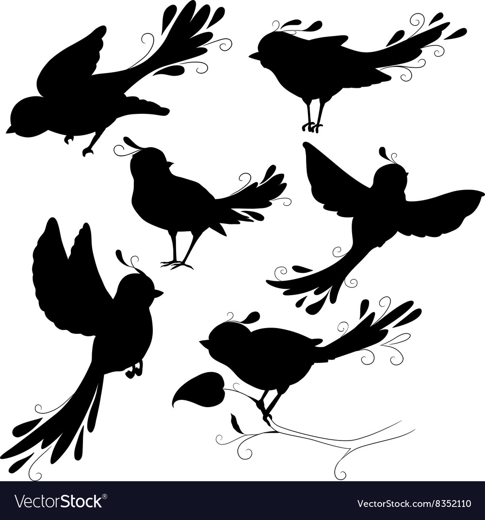 Isolated fantasy black silhouettes birds on white