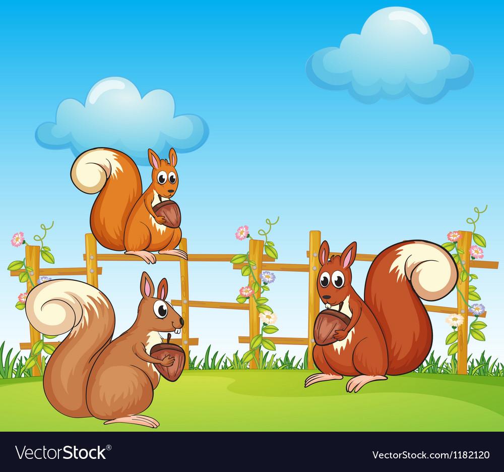 Cartoon Squirrels