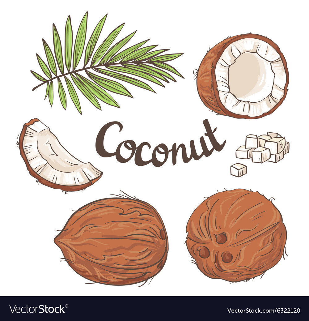 Coconut set - the whole nut leaves a coco segment