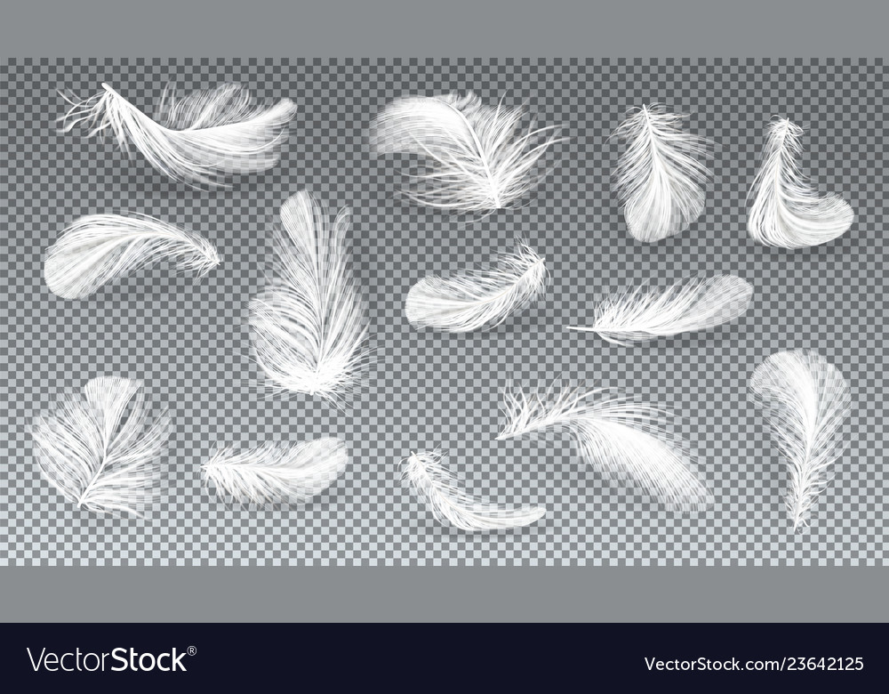 3d realistic set of white feathers