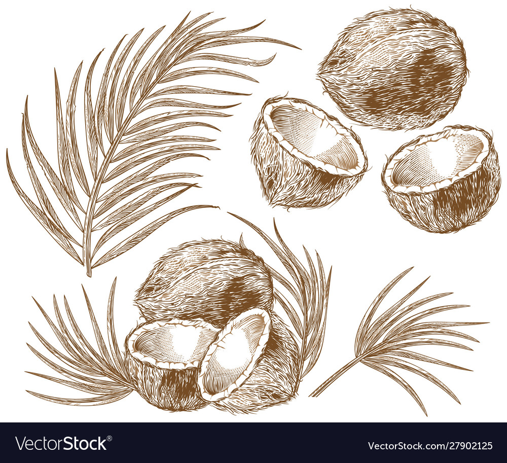 Engraving coconut and palm leaves