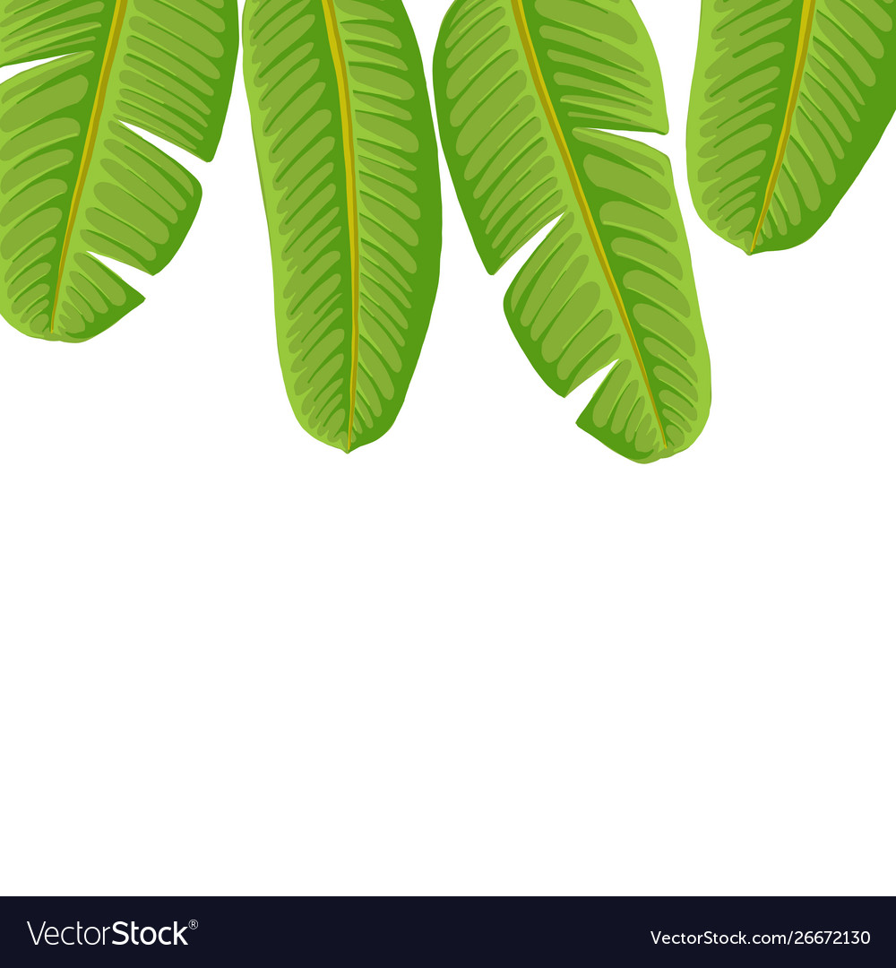 Drawing Tropical Leaves Royalty Free Vector Image Download this free vector about hand drawn tropical leaves, and discover more than 9 million professional graphic resources on freepik. vectorstock