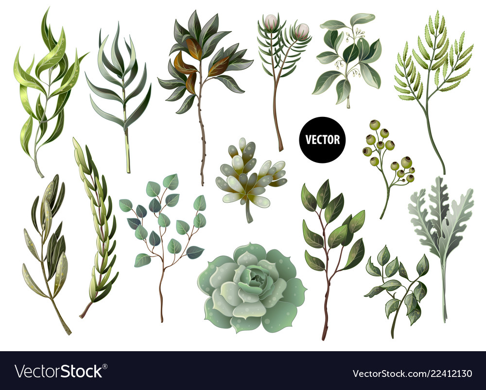 Set of greenery leaves herb and succulent