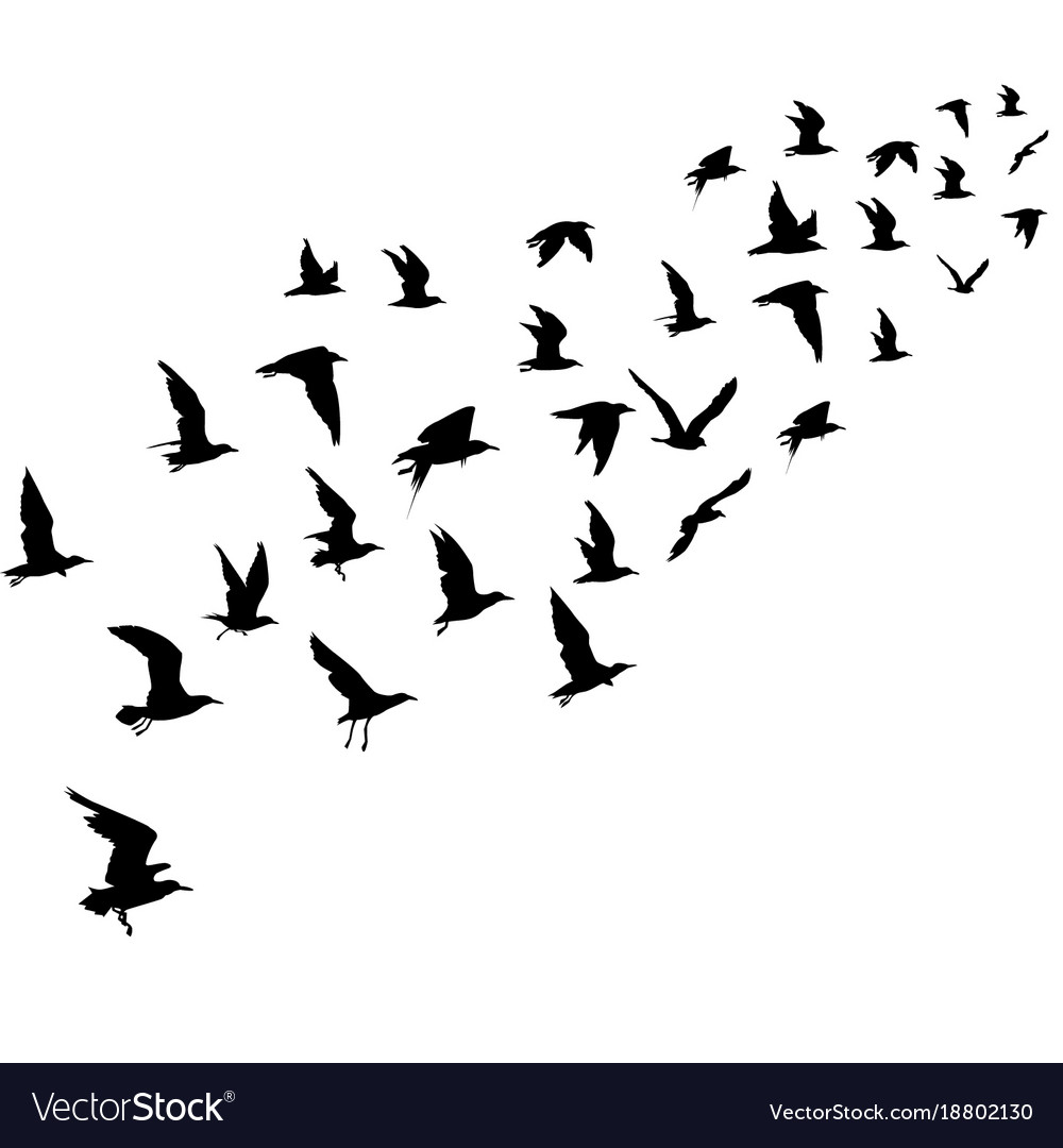Silhouettes of flying birds Royalty Free Vector Image - photo#35