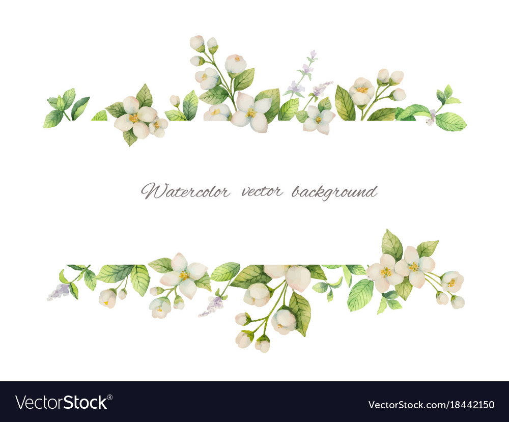 Watercolor banner of flowers jasmine and