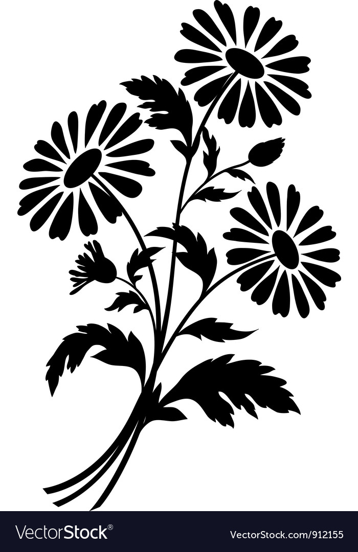 Chamomile Flowers Silhouettes Royalty Free Vector Image