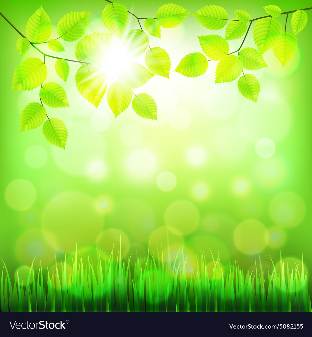 Summer nature background with green foliage