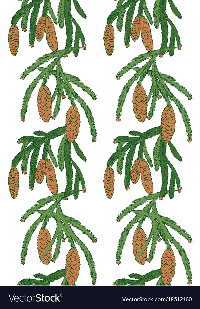 Pattern white pine tree with pine cones vector image