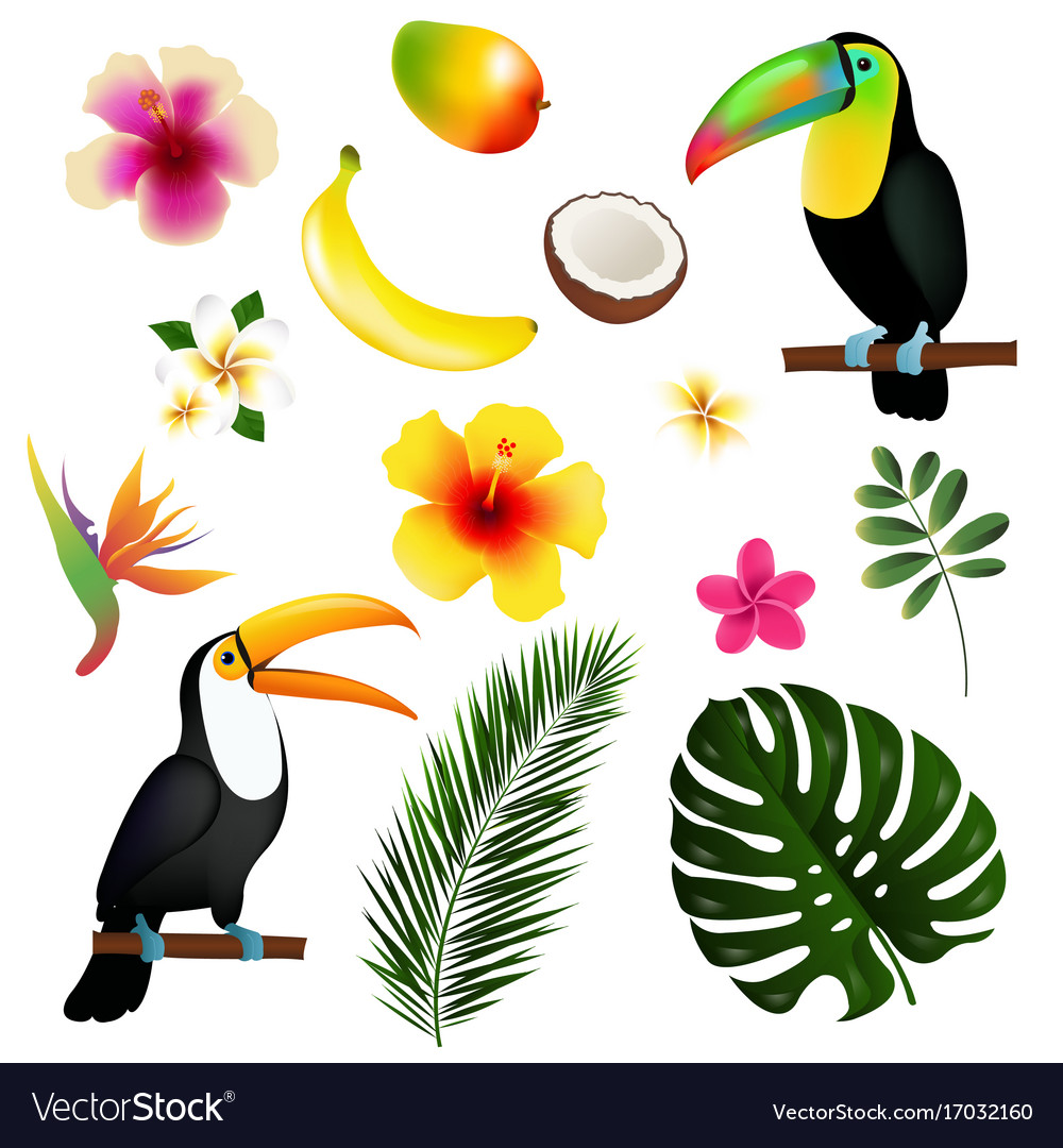 Tropical leaves toucan and fruit