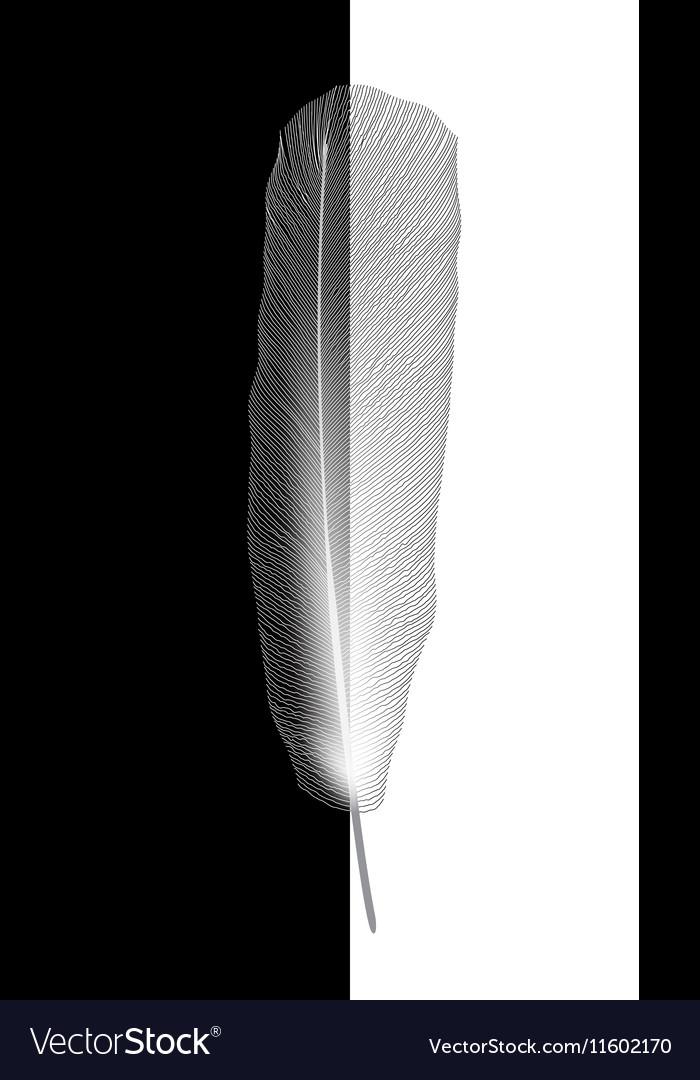 White bird feather on gray background