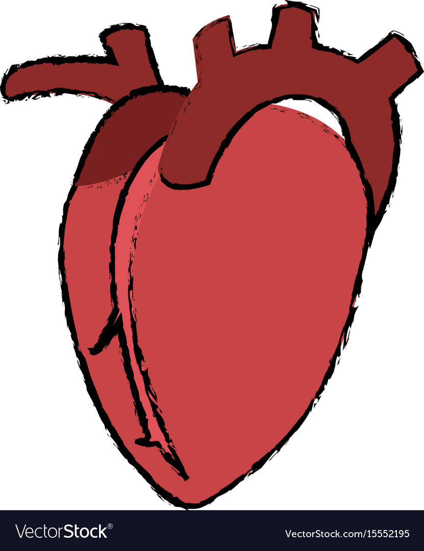 Heart human organ healthy anatomy icon Royalty Free Vector